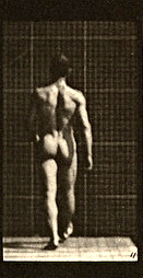 Muybridge_Strong_Gluteus_Medius_Action