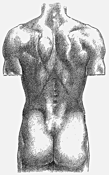 The five vertebrae of lumbar spine