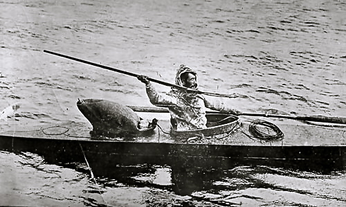 The ability to hurl a harpoon has helped Inuit hunters survive, although many now hunt with guns